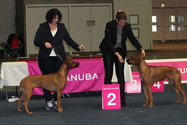 Kuanza Na Zola Love Cupido en Kuanza Na zola Valentino Cupido beiden 2de plaats in tussenklasse Landessieger