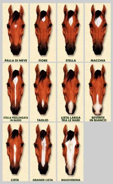 Liste nei cavalli