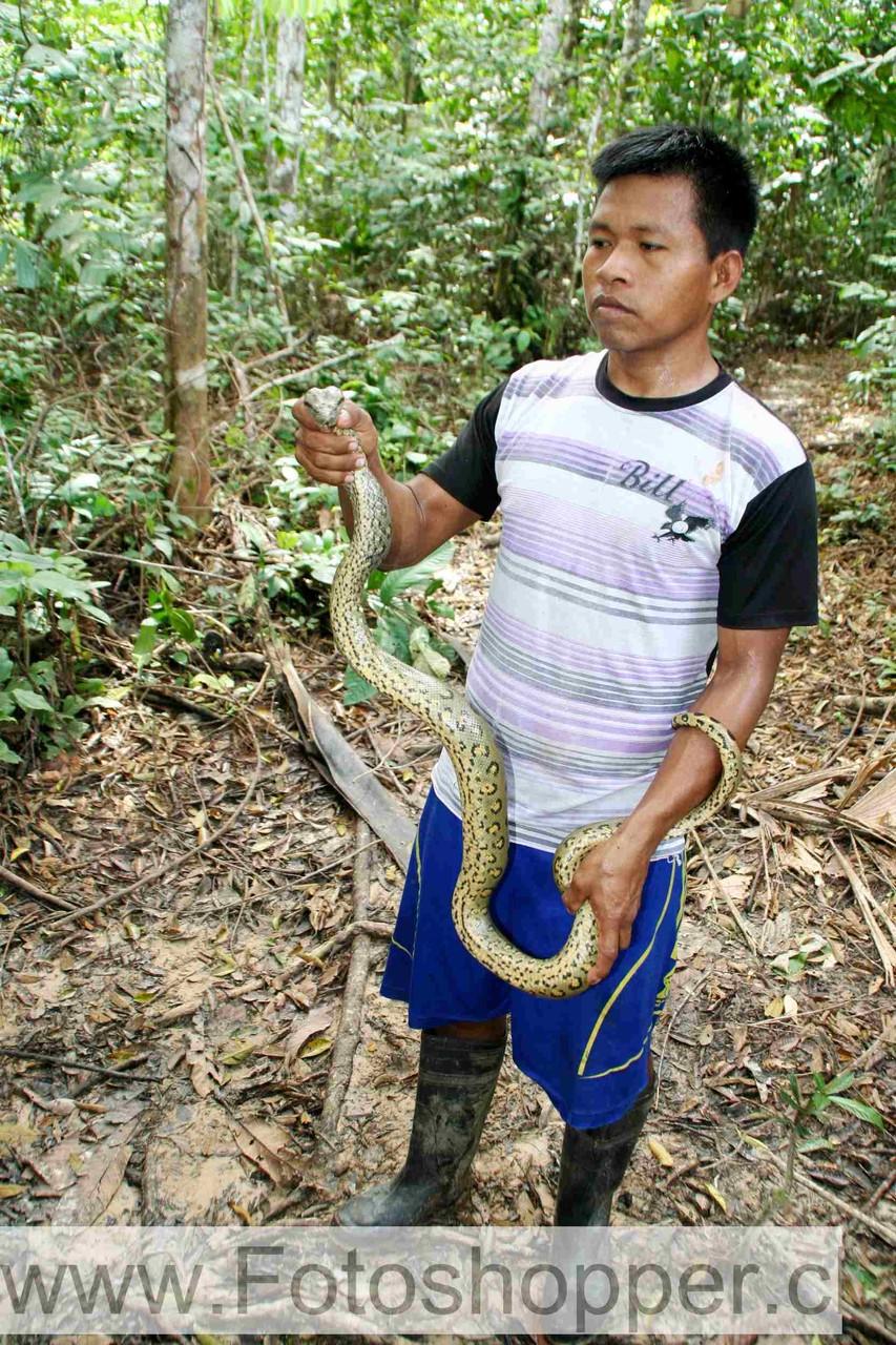 Pedro mit der Grünen Anakonda