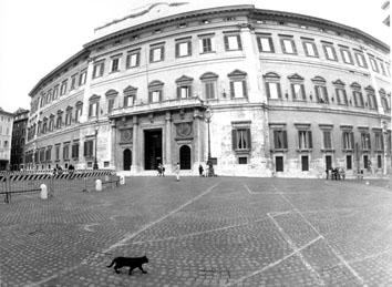 Roma, Aprile 1994 - Primo giorno Governo Berlusconi, gatto nero attraversa  Piazza Montecitorio
