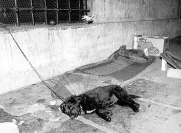 Roma, Giugno 1990 - Cane da guardia al giaciglio di un barbone alla stazione Termini