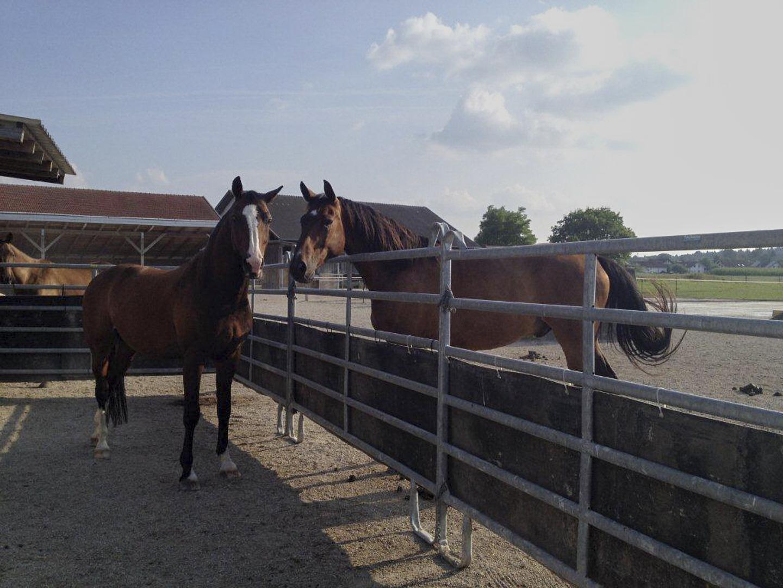 Eingewöhnungszone für neue Pferde im Aktivstall.