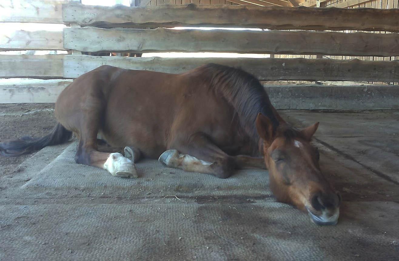 ... kann Pferd gut schlafen!
