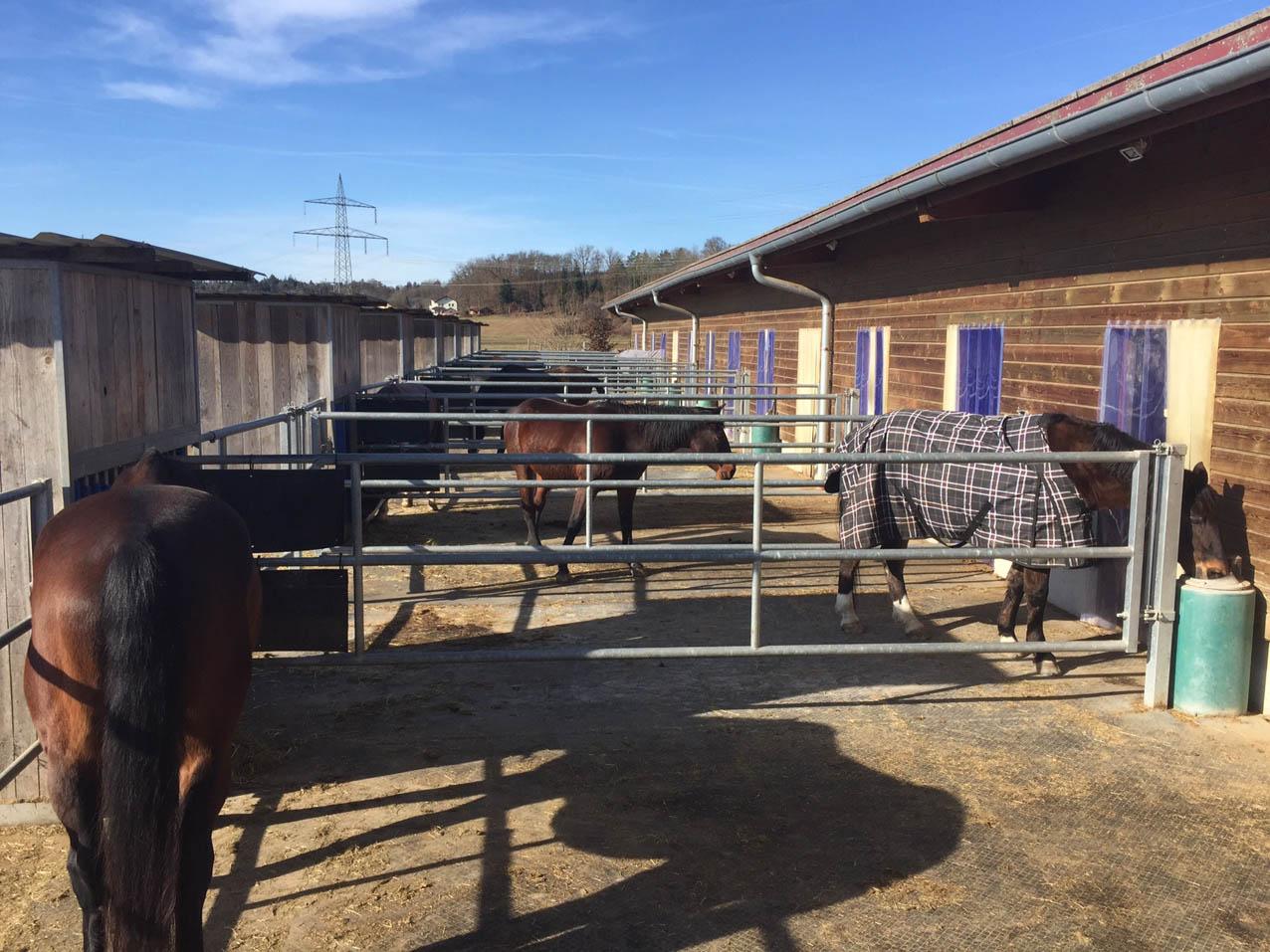 Die Pferde können jederzeit ihren Aufenthaltsort selber wählen.