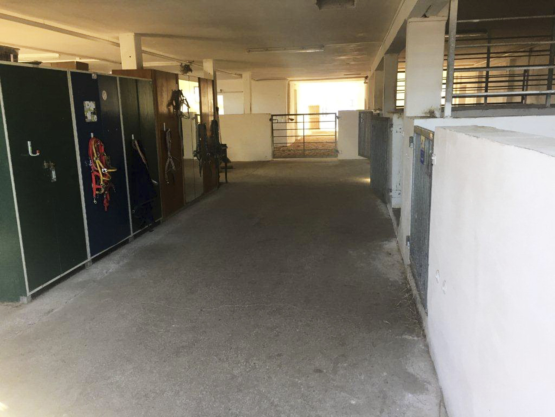 Stallgasse im Aktivstall mit Eingewöhnungs- und Krankenboxen.