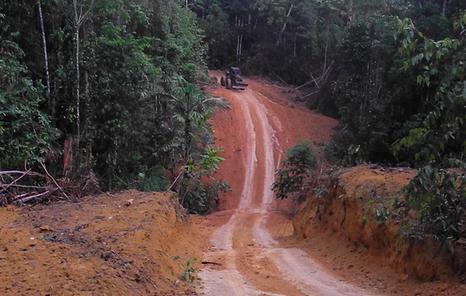 Madereros armados y poderosos terratenientes están devastando por completo la selva de los kawahivas. Foto: FUNAI