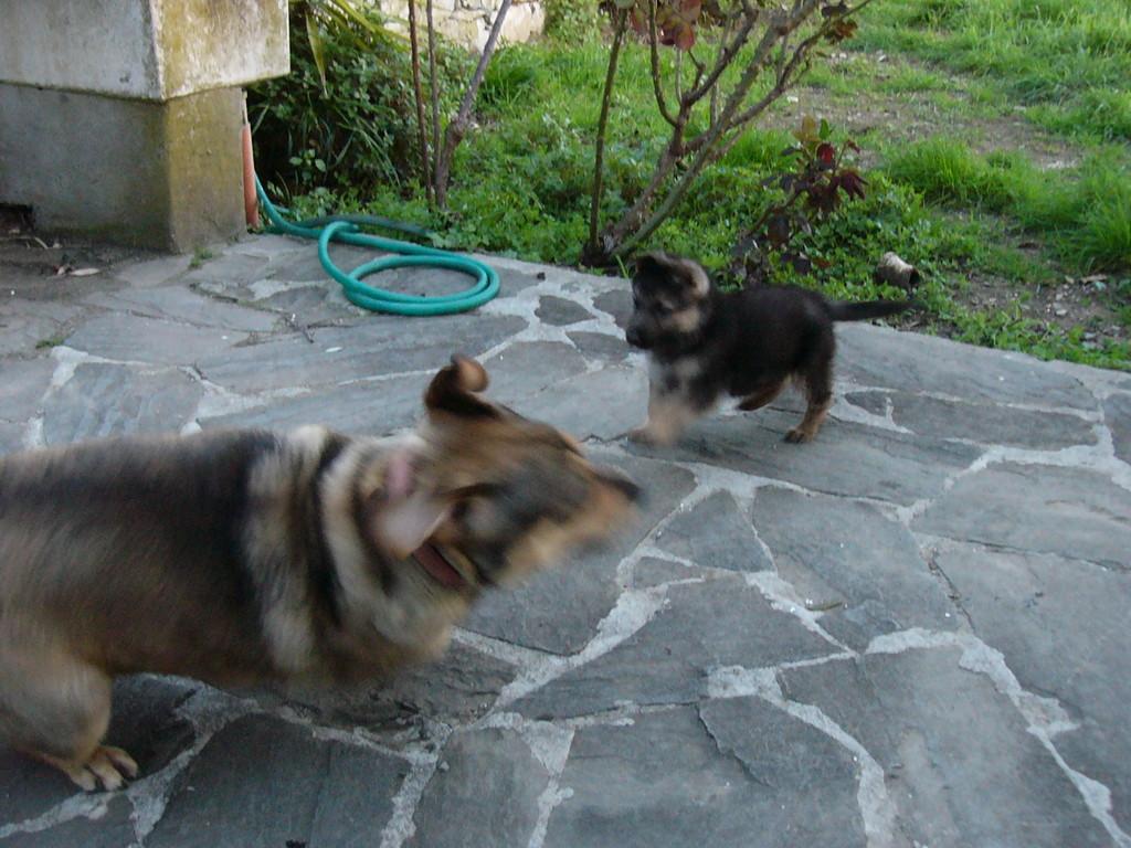 Giochiamo insieme