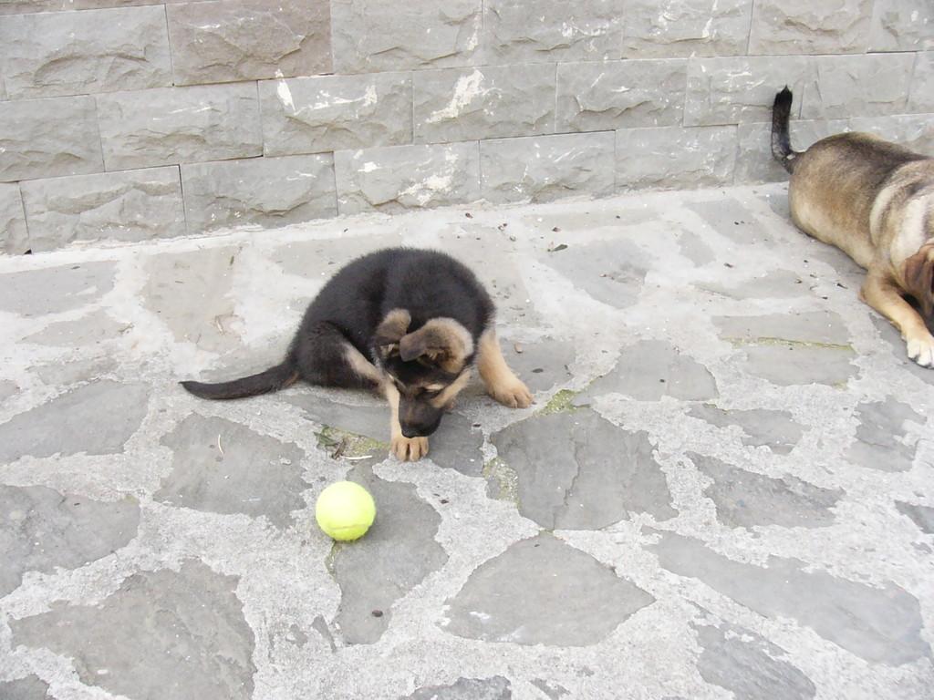 La scoperta della pallina