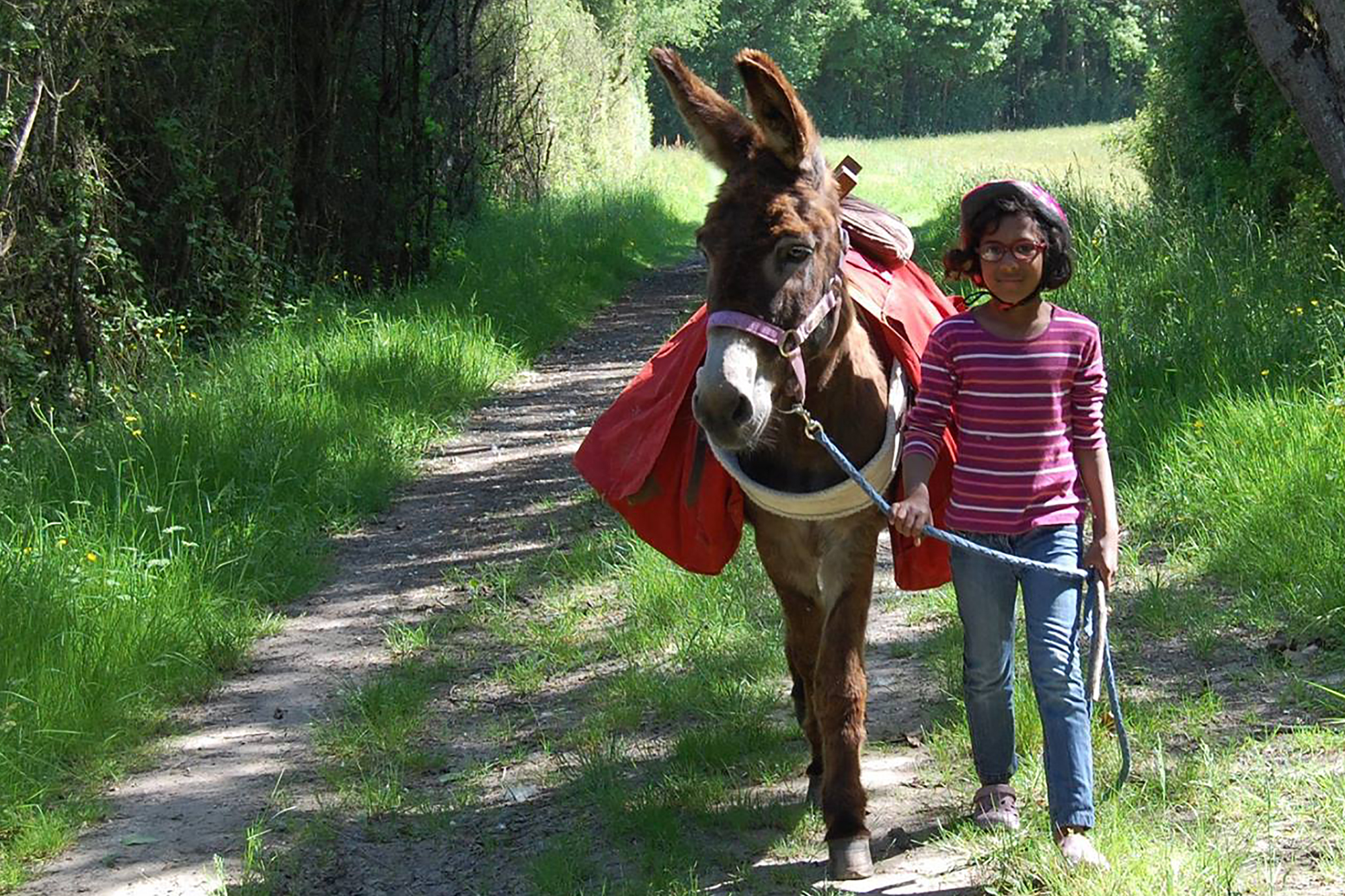 The short hikes with donkeys
