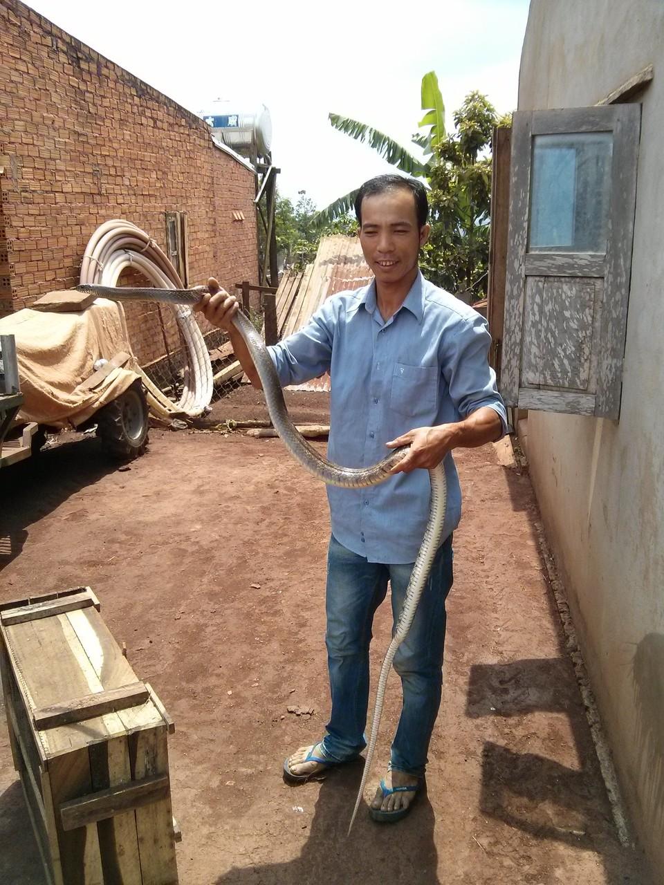 snake catcher in daklak