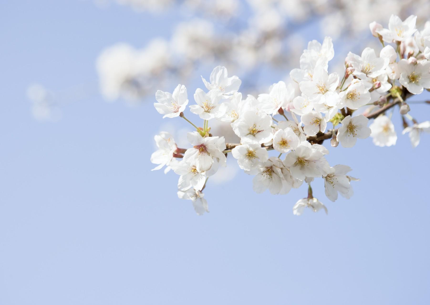 笑顔で春を迎えられるようにさ!