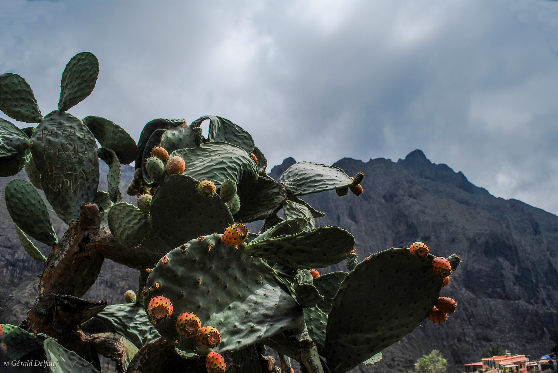 Figues de barbarie, Masca, Tenerife