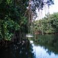 La mangrove en Guadeloupe