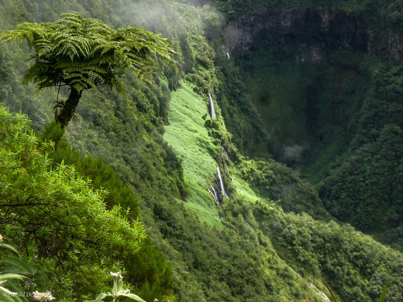 Végétation tropicale, Trou de Fer, Ile de la Réunion