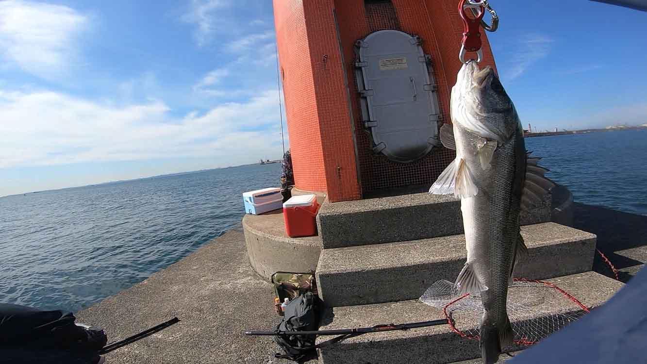 川崎新堤 シーバス68cmをショアジギングで釣った!
