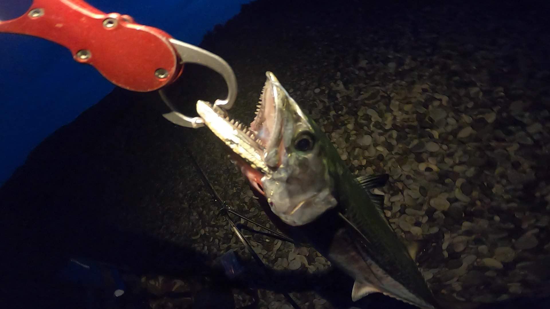 和歌山 煙樹ケ浜 ショアジギングで青物を釣りました