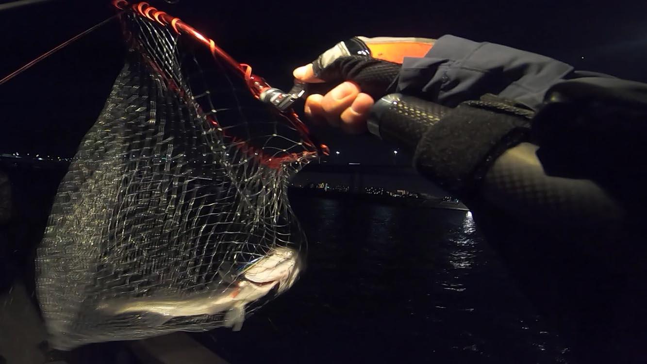 湾奥一級河川 中川葛西橋で良型シーバス60cmを釣った!