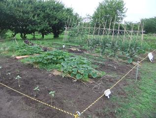 学童・学校・畑ボランティア共用の畑(その2)