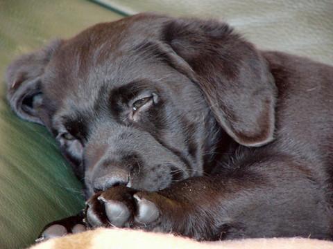 März 2006-Unser Baby ist gerade eingezogen