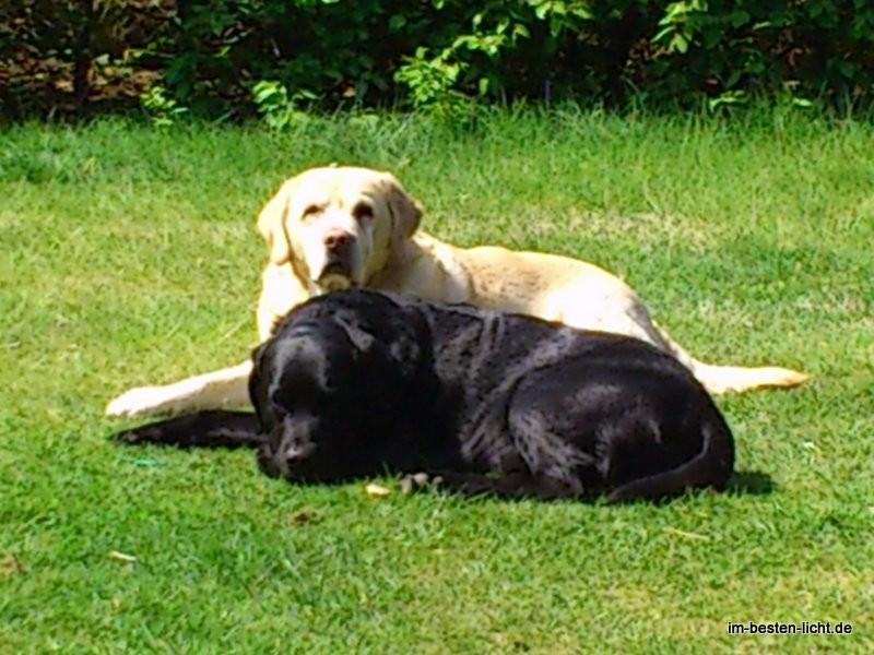 Paddy und Bruder Gandalf