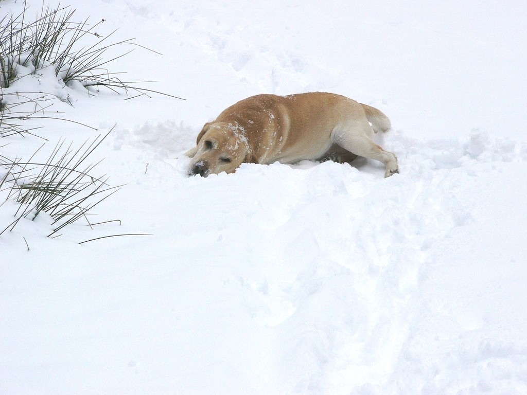 Dundee liebte Schnee!