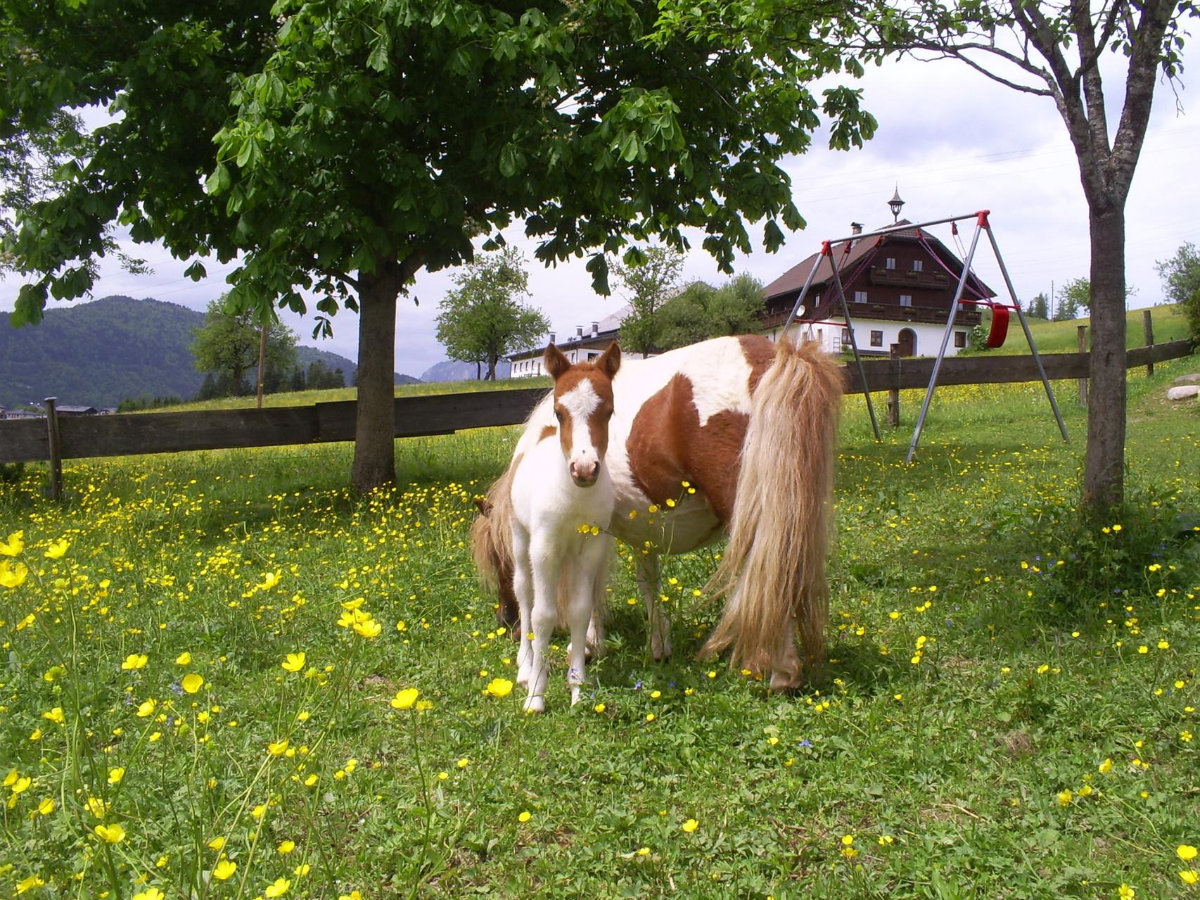 Mini Pony für Kinder