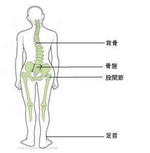 背骨、骨盤、股関節、足首