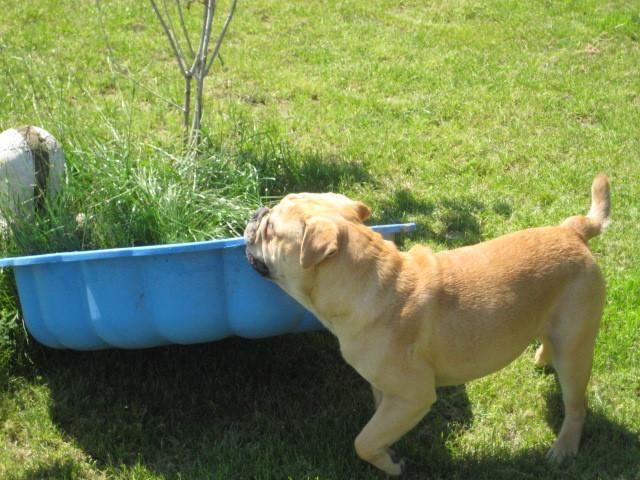 Oscar trägt sein Planschbecken in die Sonne