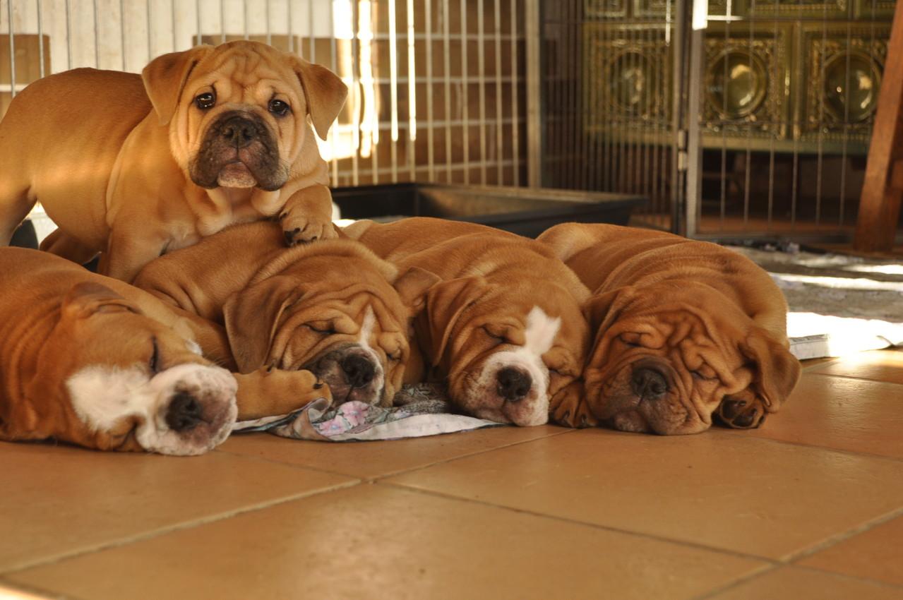 Oscar bewacht seine schlafenden Geschwister