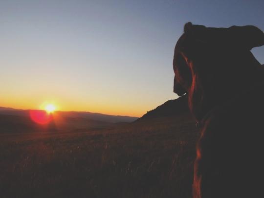 bigousteppes mongolie chien soleil