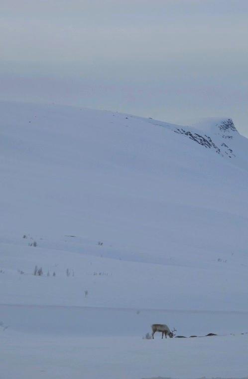 bigousteppes norvège arctique glace neige rennes
