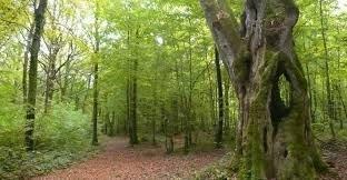 Forêt d'Aumont
