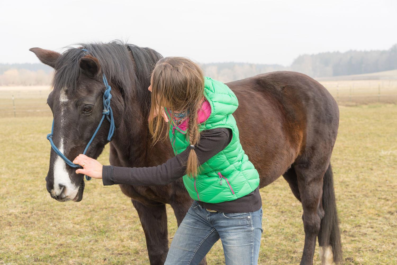 Faszien lösen in der Schulterregion des Pferdes