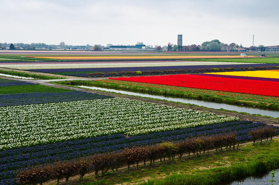 Кёкенхоф-цветочный рай Голландии