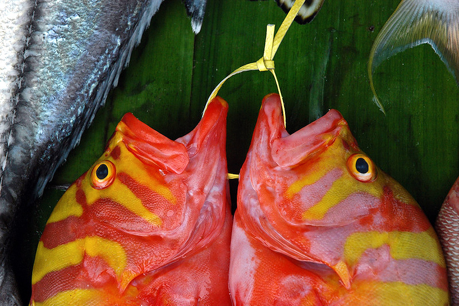 Остров Биак: рыбные рынки