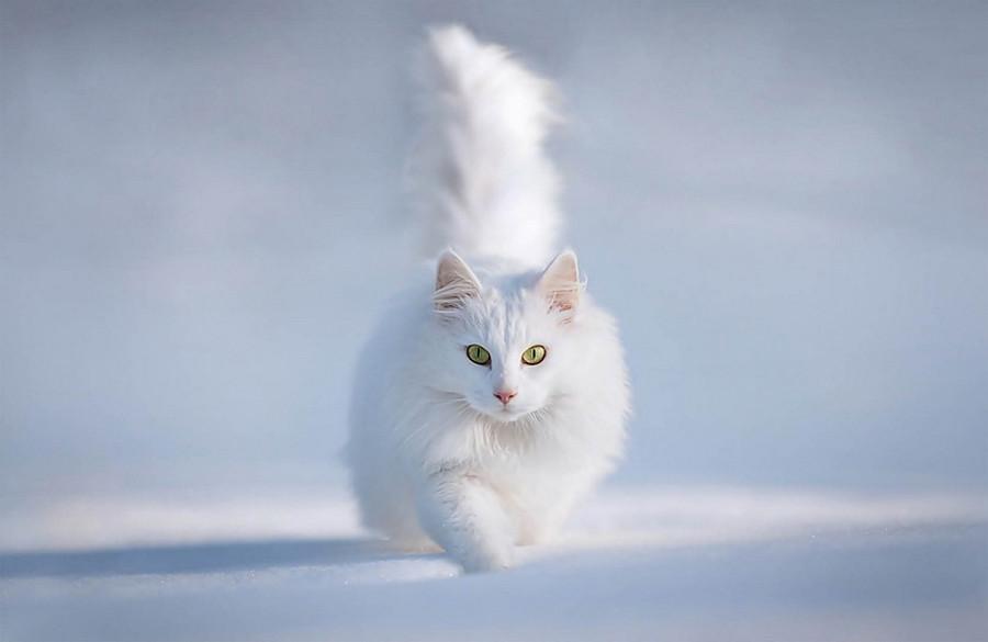 кошки коты котэ