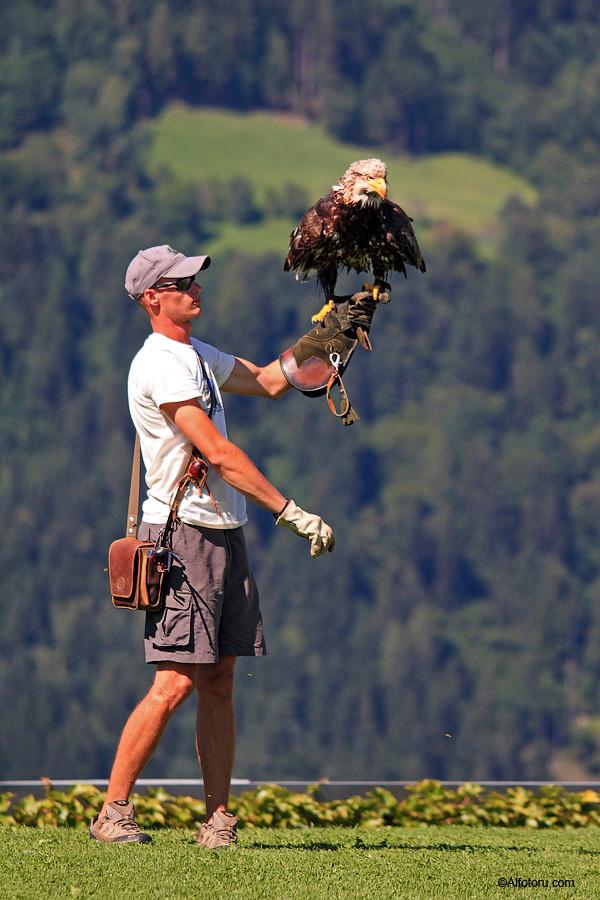 орёл хищная птица