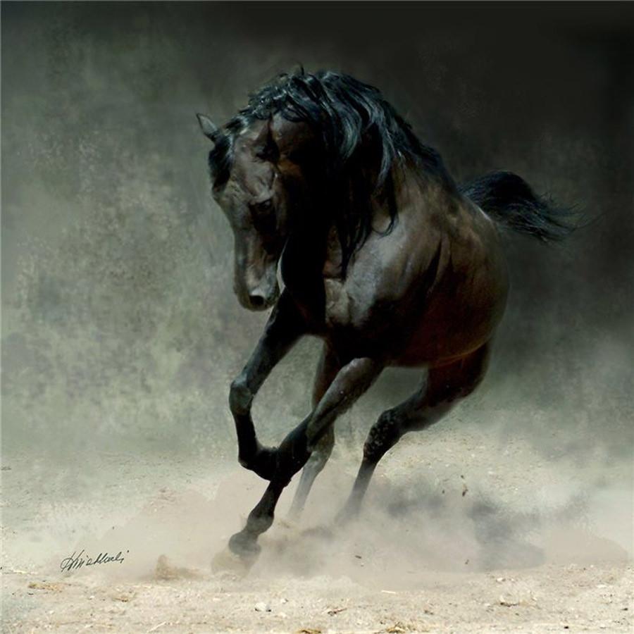Лошади Wojtekа Kwiatkowski