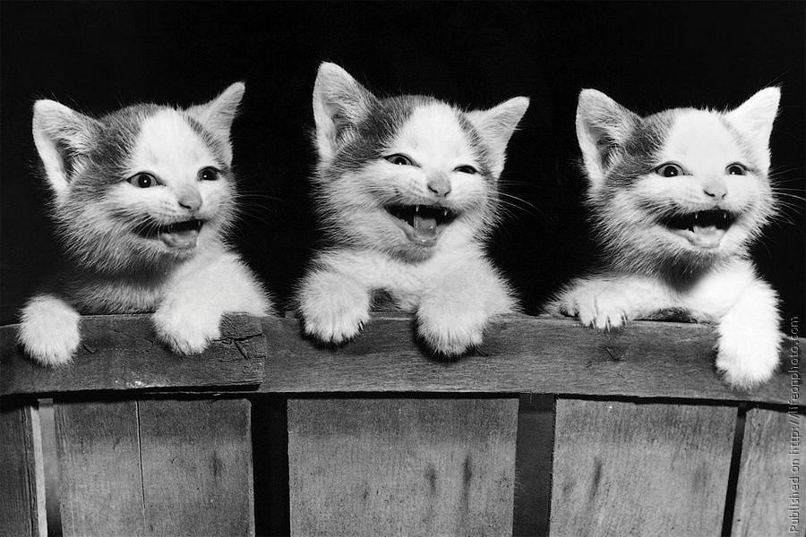 коты и кошки