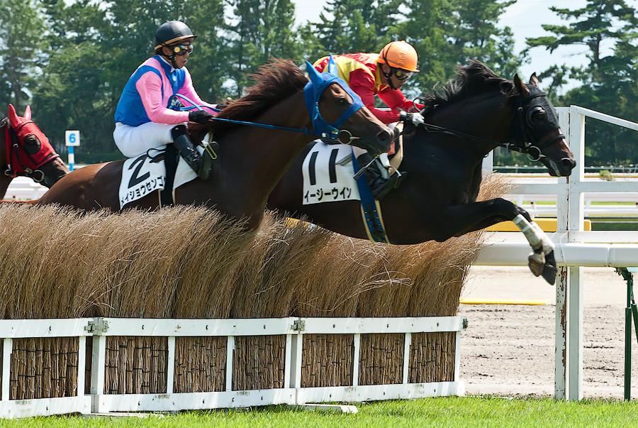 скачки лошади иподром