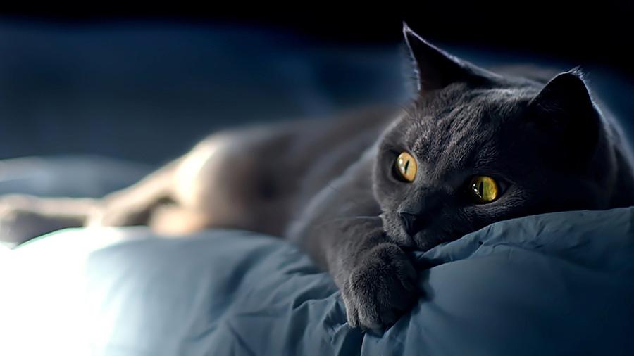 ... на рабочий стол - коты, кошки, котята: www.alfotoru.com/2012/03/31/обои-коты-кошки-котята