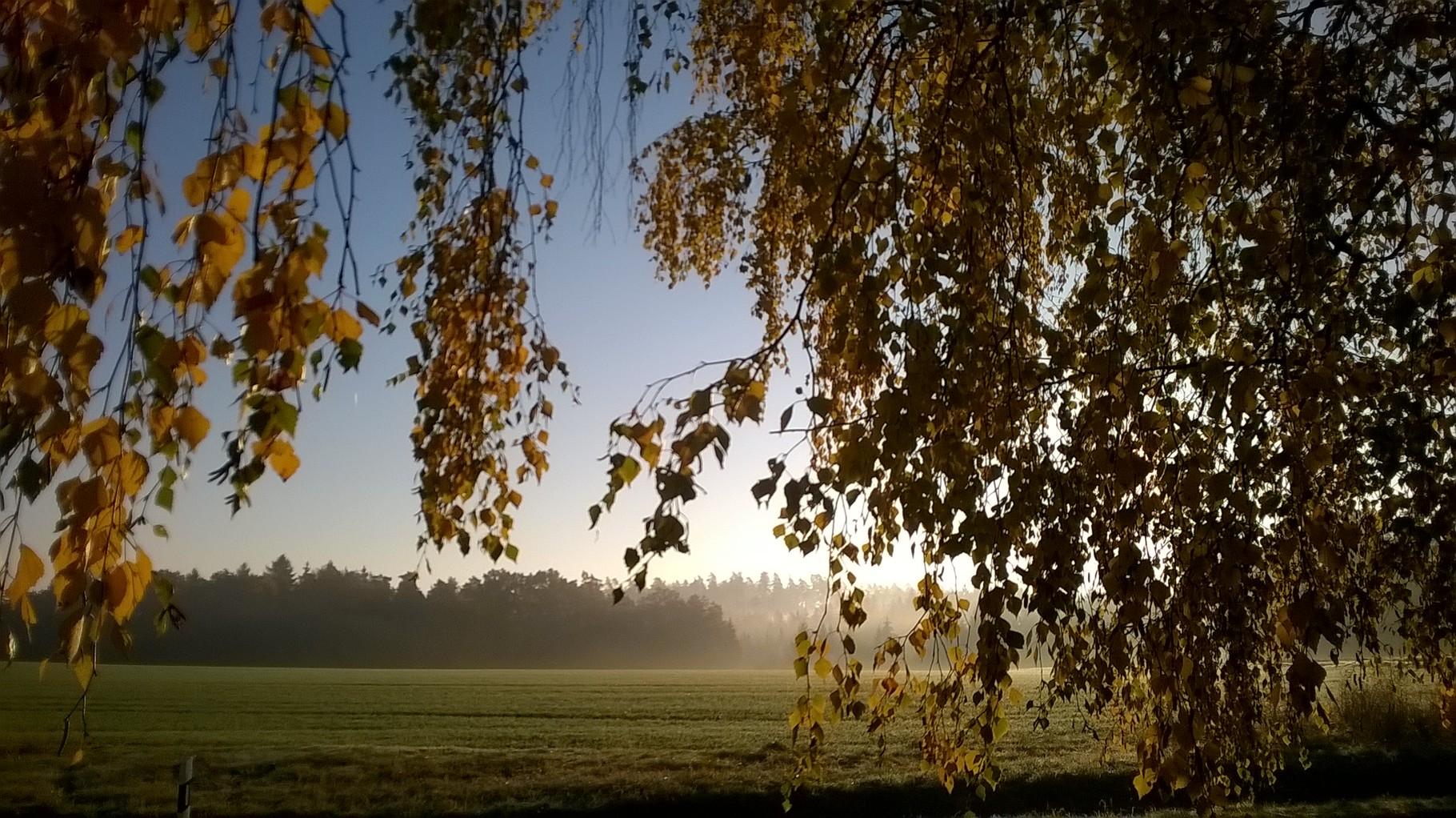 Herbstimpression 2 - meines Coaching-Aussenbereichs