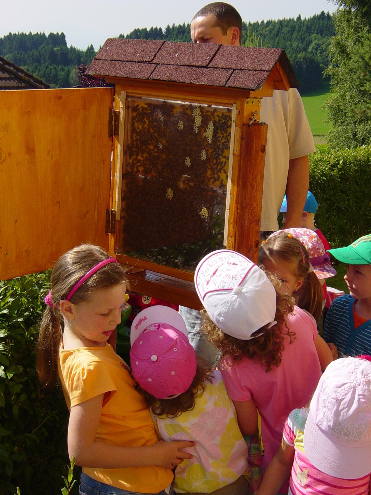 Das Bienentreiben im Schaustock