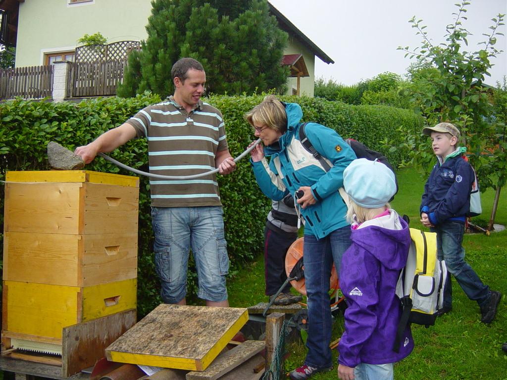 Hören und Riechen in den Bienenstock