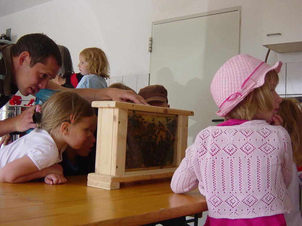 das emsige Treiben der Bienen