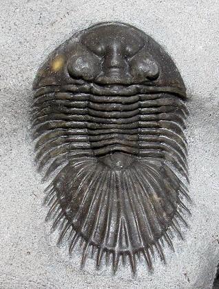 Fotografía: http://www.trilobites.com