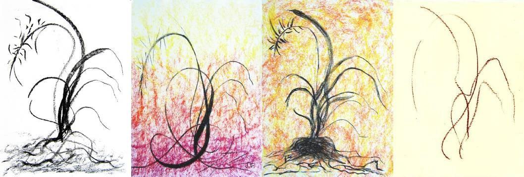 courbes végétales / fusain, sanguine & pastels