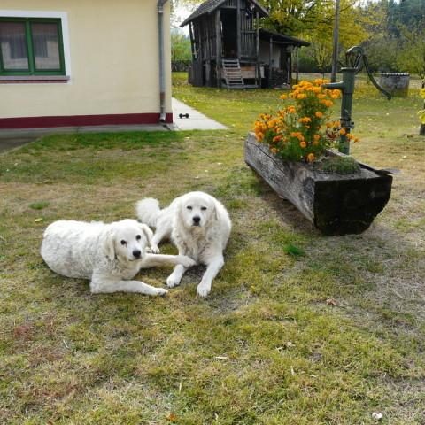Sina und Arthur