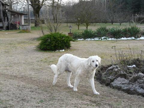 Lajka (01/2011)