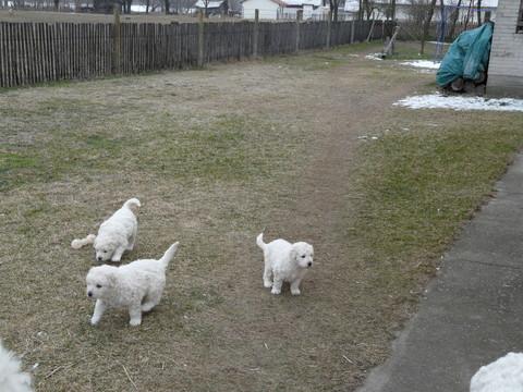 Welpen auf Entdeckungstour (03.02.2011)